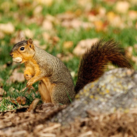 Every single gardener likely has a story about squirrels and chipmunks that have eaten their bulbs or dug up their treasured plants.
