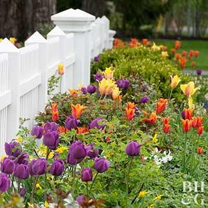 Beautiful 10 Tips For Protecting Tulip Bulbs