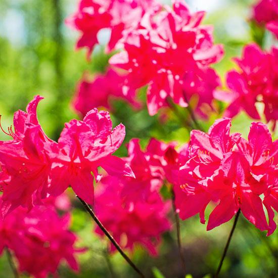 Flowering Shrubs By Season