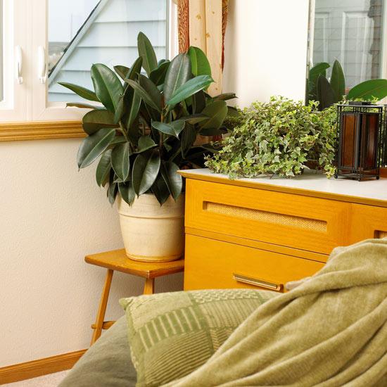 best houseplants for bedrooms