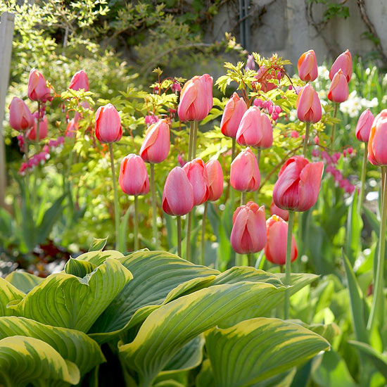 Top Tulips that Come Back Every Year