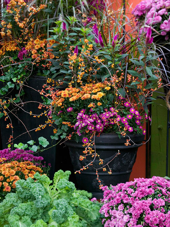 Superb Fall Garden Ideas Part - 5: The Right Mum For The Right Place