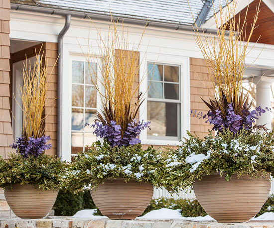 Protect Shrubs from Winter Damage
