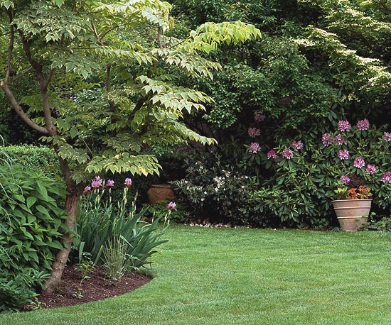 Your Guide to Lawn Repair