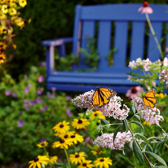 But Have You Considered Attracting Monarch Butterflies Specifically To Your  Garden? These Orange And Black Beauties Feed On Milkweed ...