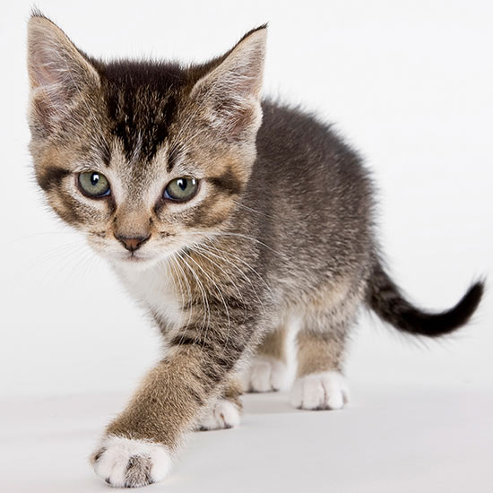 50 Cute Cat Names