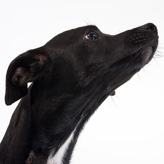 Preventing Dog Bites