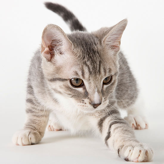 Cat Names that Start with S