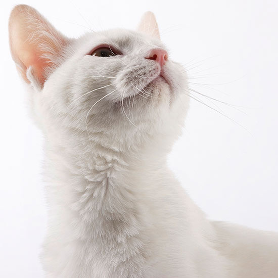 Gorgeous Names for White Cats