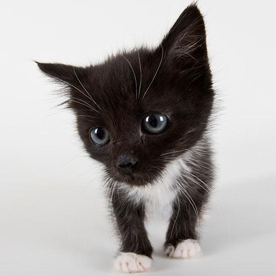 Funny Cat Names For Comical Felines Better Homes Gardens