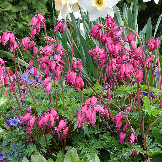 20 Black Flowers And Plants To Add Drama To Your Garden: The Best New Shade Perennials For 2014