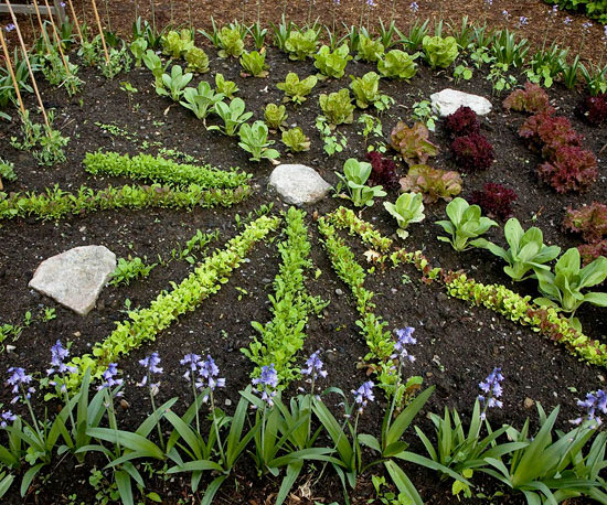 Summer Might Be High Season In The Vegetable Garden, But Autumn Brings  Wonderful Rewards As Well. Fast Growing Salad Crops Will Revive The Most  Bedraggled ...
