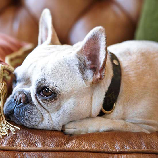 12 Steps For Perfect Pet Pictures