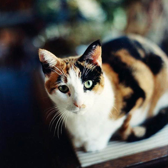 Cute Cat Names For Calico Cats