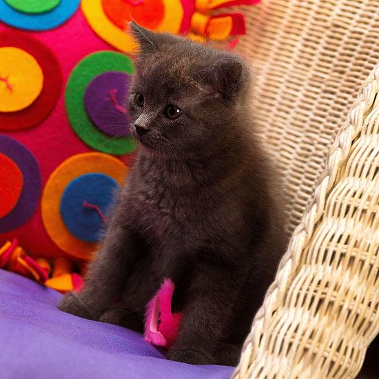 Cute Grey Cat Names