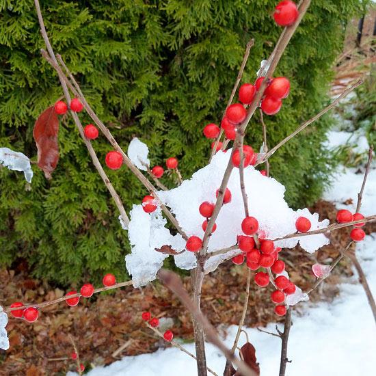 10 Winter Garden Delights