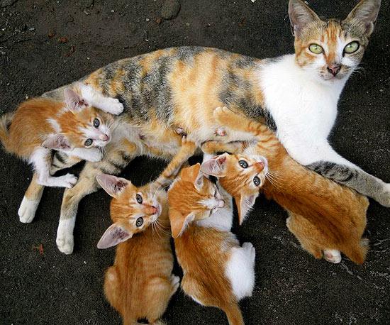 Black White And Ginger Cat Names