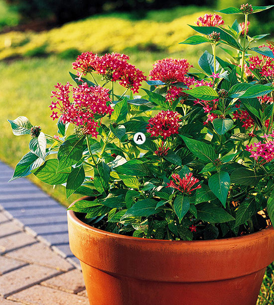 Top Butterfly Container Garden Ideas