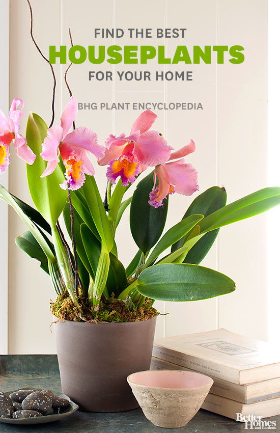 Plant Indoor Garden Houseplants workwithnaturefo