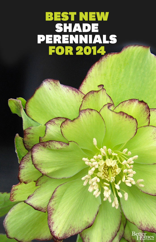 The best new shade perennials for 2014 mightylinksfo Images