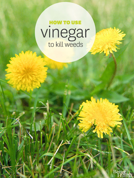 Vinegar as weed killer for How to get rid of weeds in garden