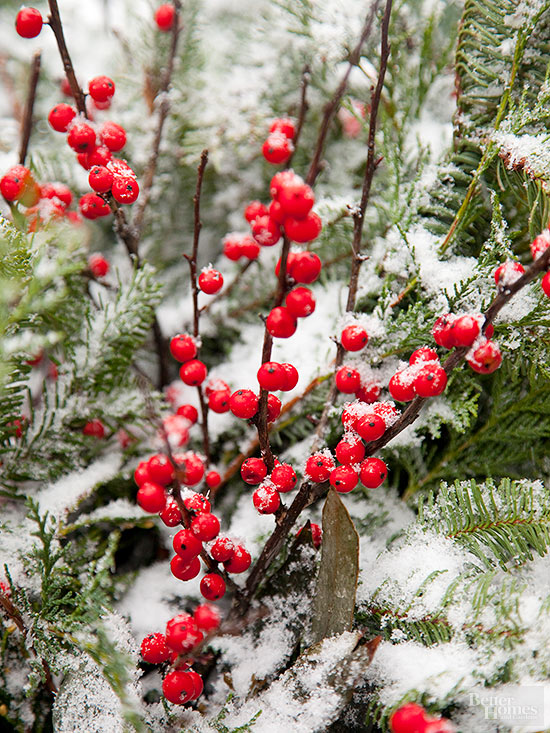 Shrubs With Winter Interest