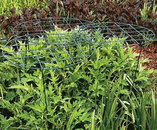 Staking and Training Perennials
