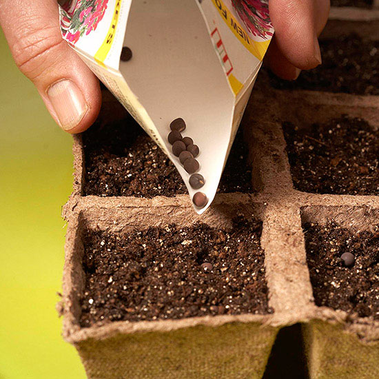 Our Top 10 Garden Tips