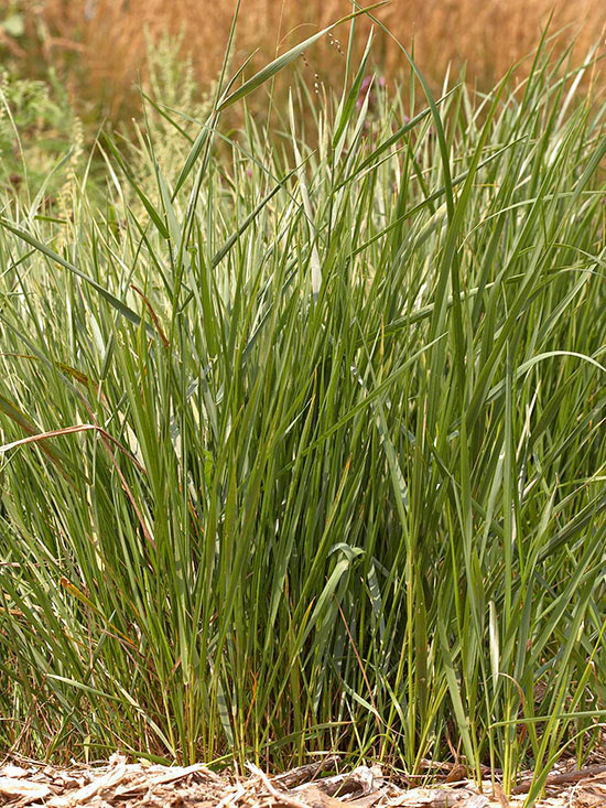What's the Difference Between Hulled and Unhulled Grass Seed?