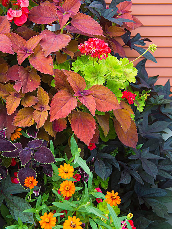 How to Use Warm Colors in the Garden