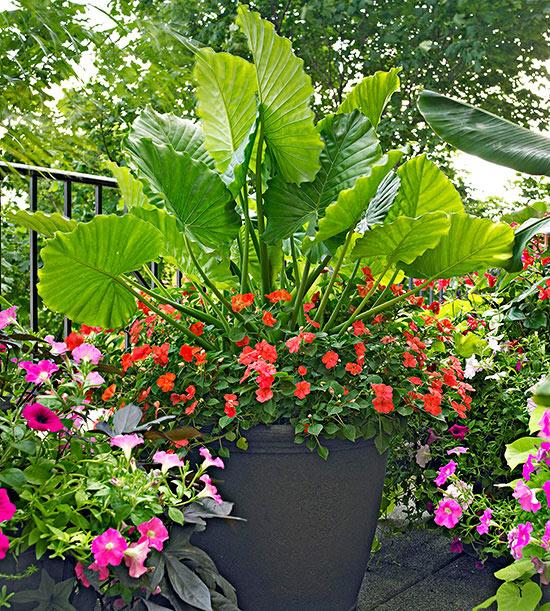 Delicieux Container Garden Design Basics