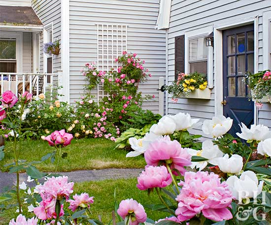 Long living perennials for Domestic garden ideas