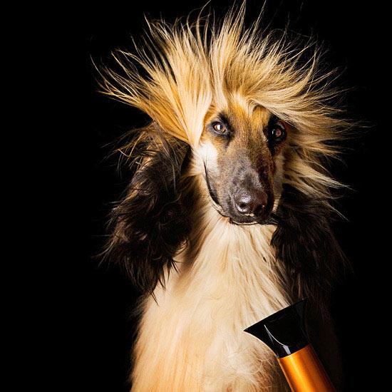 Grooming Your Pet: A Basic How-To