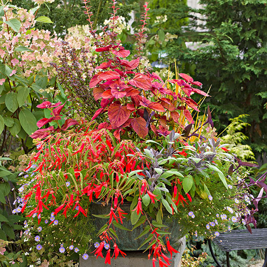 Buyer's Guide to Plant Containers