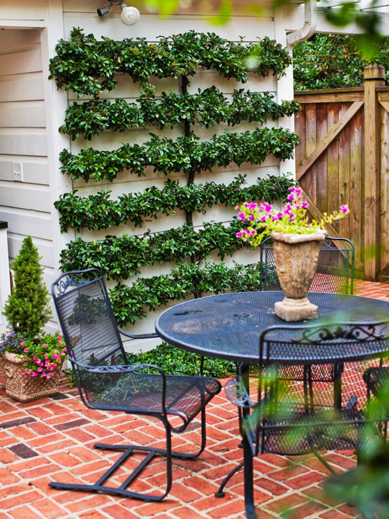 decorate a wall with an espaliered tree - Outdoor Patio Decorating Ideas On A Budget
