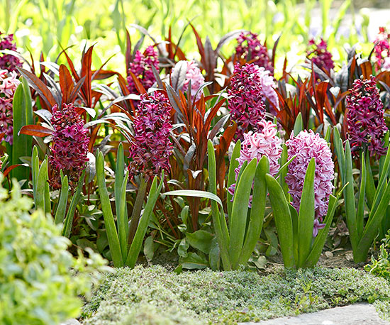 How to Force Hyacinths