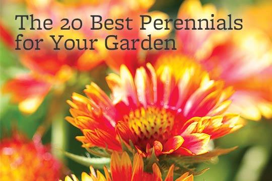Perennials 080614perennialsgnditionrgestg mightylinksfo