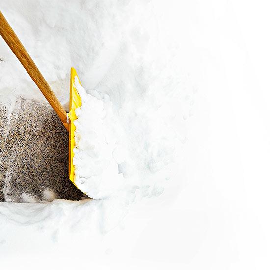 Keep Your Landscape Safe from Winter Salt