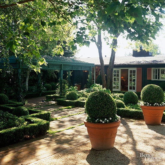 Can Established Boxwoods Be Transferred to a New Location?