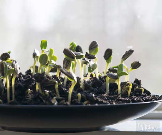 Growing Sprouts in 10 Easy Steps