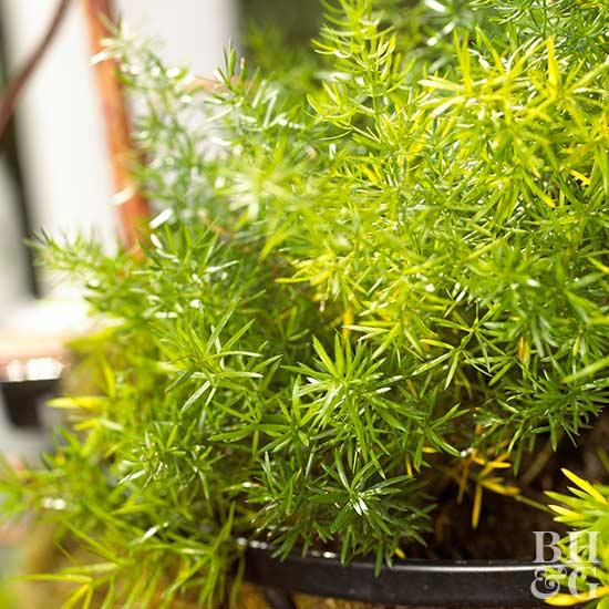 Small space planting tips for Plantas de exterior que no necesitan sol