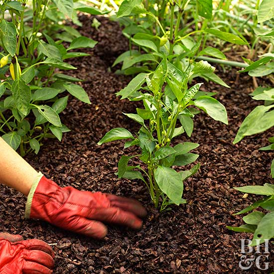 Beginner vegetable garden - Gardening mistakes maintaining garden winter ...