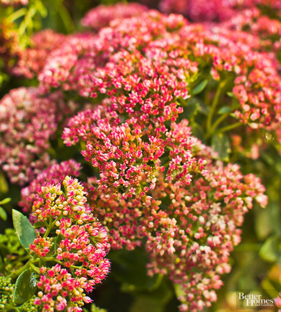 Low maintenance perennials of the mountain west mightylinksfo Choice Image