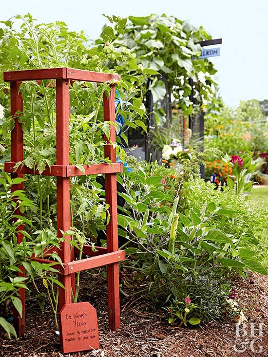 Tomato Garden, Garden, Gardening, Tomatoes, Vegetable, Tomato Cage