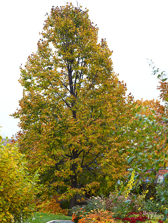 The Best Shade Trees for Your Yard