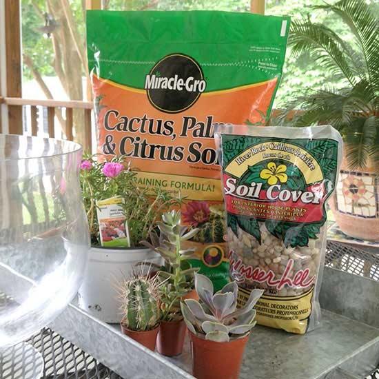 how to make moss grow