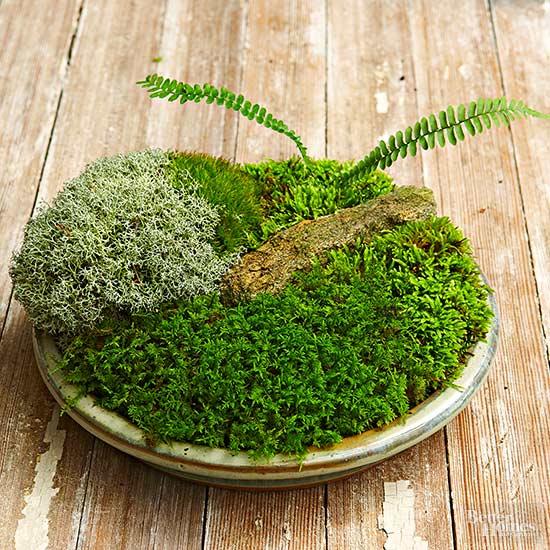 How To Make A Tabletop Moss Garden Better Homes Gardens