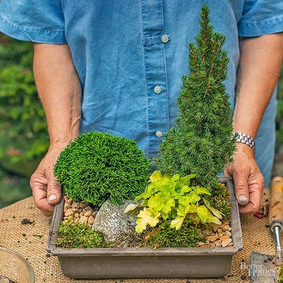 Adorable DIY Miniature Evergreen Garden