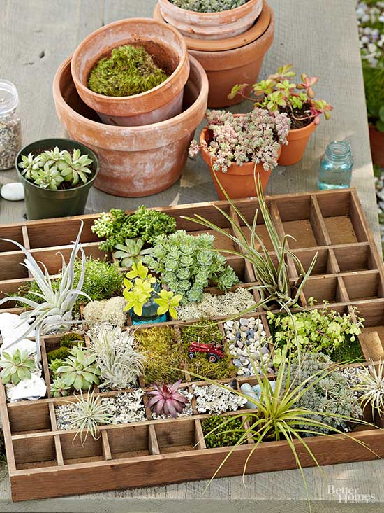 Miniature garden ideas for every taste for Indoor japanese garden plants