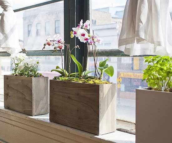 Short On Green Space? Easy Indoor Gardening Essentials!